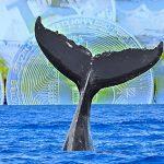 【仮想通貨】ビットコイン急落に「クジラ」の影 謎の大量保有者が売りか